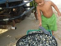 Enfants et leurs coquillages, Galinhos Bresil