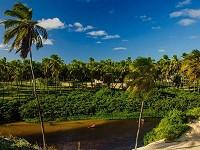 une piste bordée de cocotiers dans le Nord Est brésilien